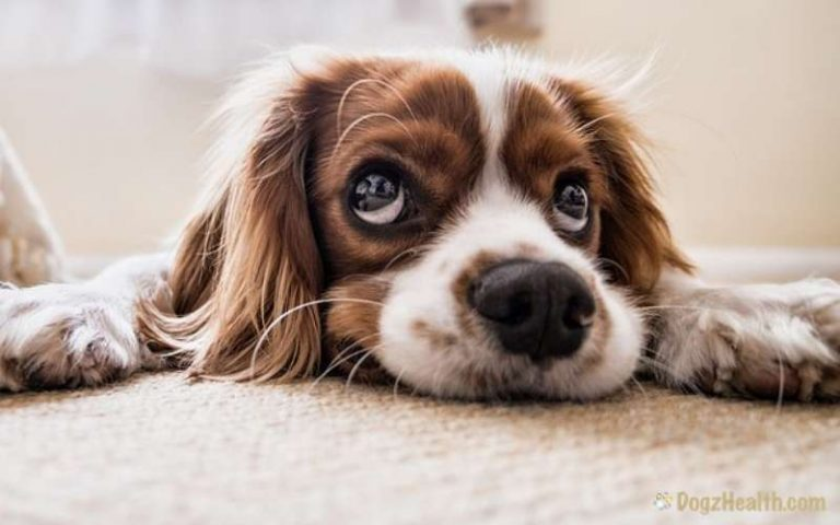 Common Dog Diseases – Symptoms & Treatments