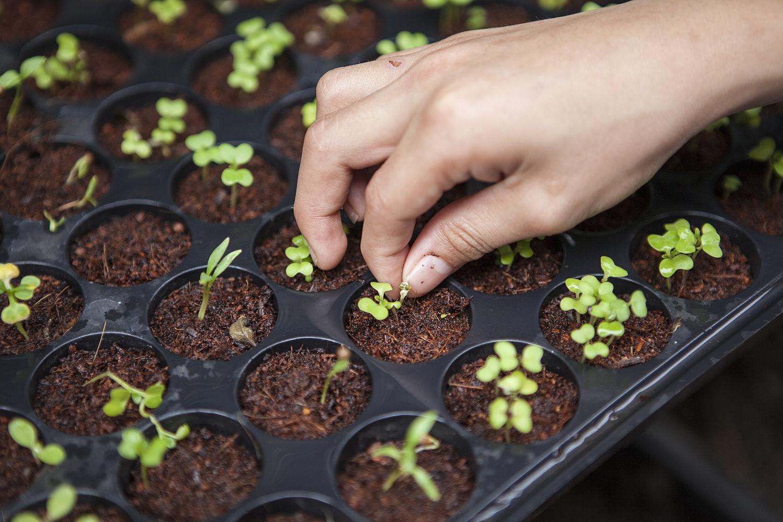 Dutch Seeds Shop review