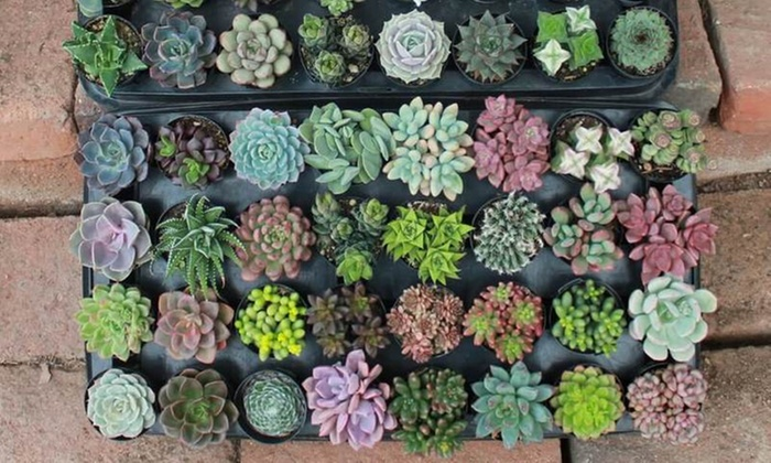 The Succulent Source Review – Beautiful Succulents for Weddings