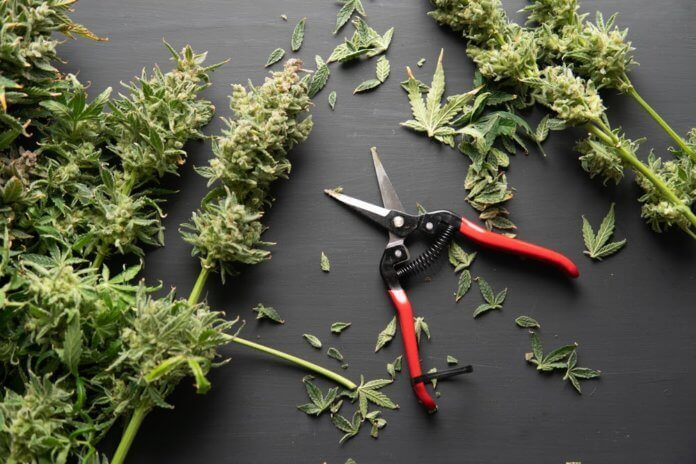 Herb Approach Review – Best Online Shop for Marijuana