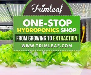 Trimleaf review on Hydroponics System