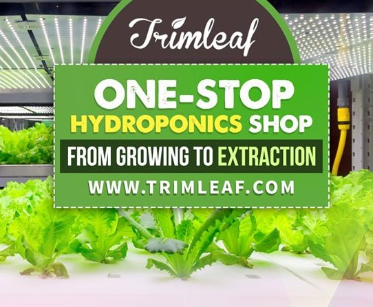 Trimleaf Review – 4 Benefits Of The Hydroponics System
