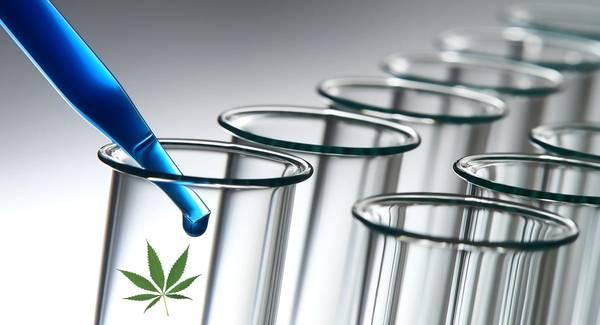 Test Kit Plus Review – Drug Identification Test Kits