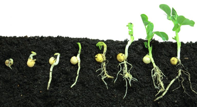 Nurture Your Garden With Seeds Now Review
