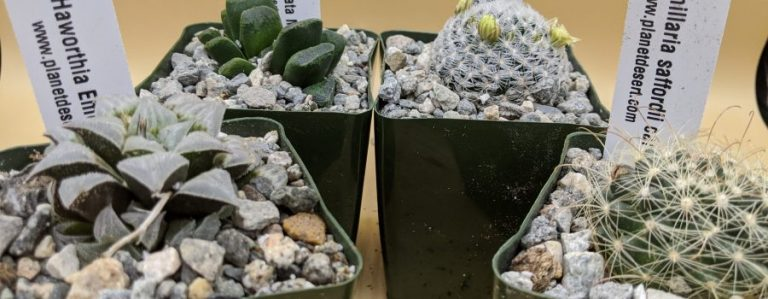Planet Desert Review – A Wide Variety Of Cacti And Succulents