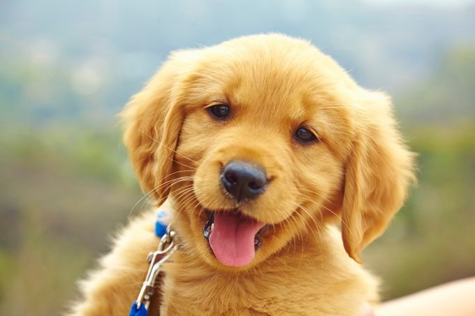How to Raise a Puppy – 6 Tips on Puppy Raising